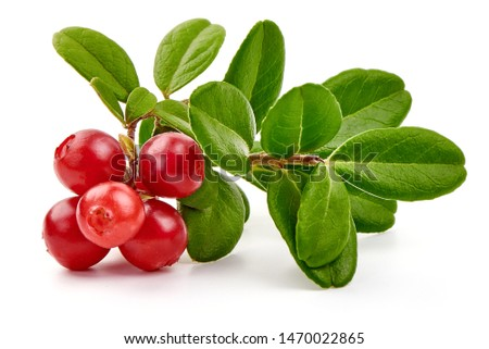 Lingonberry with leaves, isolated on white background. #1470022865