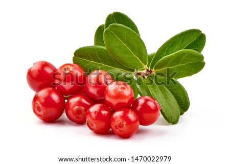 Lingonberry with leaves, isolated on white background. #1470022979