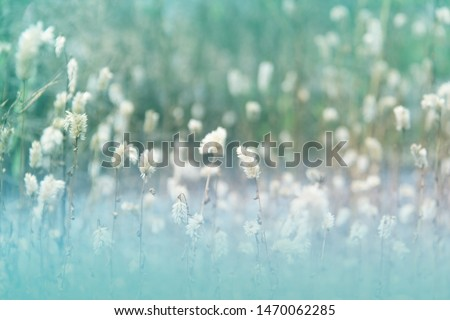 Blurry picture of flower grass in the garden. Green soft and pastel color. Concept of natural wallpaper. #1470062285