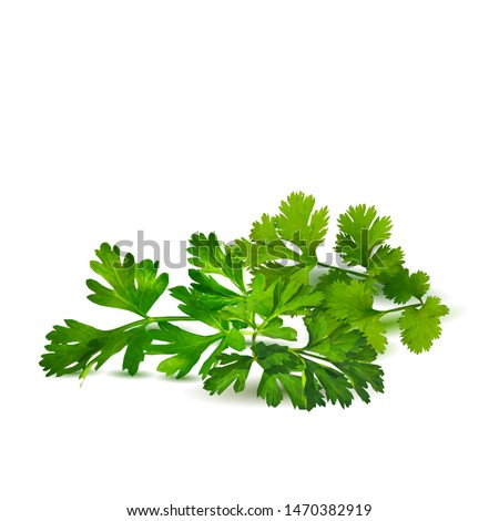 Fresh green plant, nutritious, tasty green parsley. Vector illustration. Vegetables ingredients in triangulation technique. Parsley low poly. #1470382919