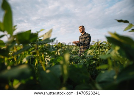 Agronomist inspecting soya bean crops growing in the farm field. Agriculture production concept. young agronomist examines soybean crop on field in summer. Farmer on soybean field Royalty-Free Stock Photo #1470523241