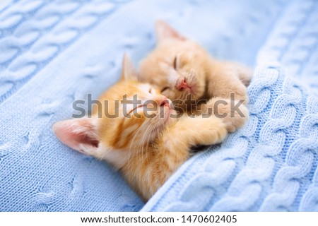 Baby cat sleeping. Ginger kitten on couch under knitted blanket. Two cats cuddling and hugging. Domestic animal. Sleep and cozy nap time. Home pet. Young kittens. Cute funny cats at home. #1470602405