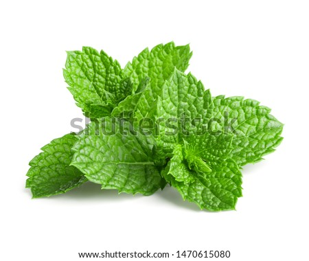 Fresh mint isolated on white background #1470615080