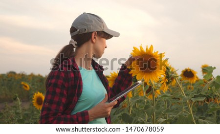 business woman analyzes profits in field. farmer woman working with a tablet in a sunflower field in the sunset light. Agronomist studies harvest of sunflower. The concept of farming and agriculture. #1470678059
