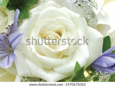 The beautiful flowers in beautiful colors of nature  #1470678362