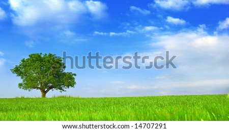 Green fields, the blue sky and tree #14707291