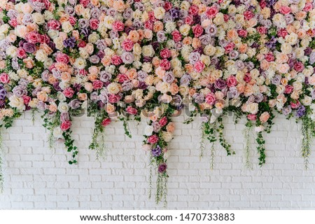 Beautiful Decorative Colorful Roses on Brick Wall. Wedding Party Decor Detail. Delicate Clambering Plant Blossom Pastel Flower on White Background. Elegant Arrangement Floristics Setting #1470733883