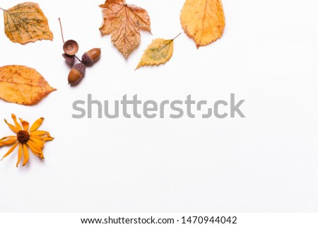 Background creative of yellow dry leaves, acorn, walnut, flowers. concept of autumn.  Top view, flat #1470944042