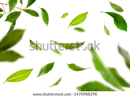 Vividly flying in the air green tea leaves isolated on white background 3d illustration. Food levitation concept. High resolution image #1470988298