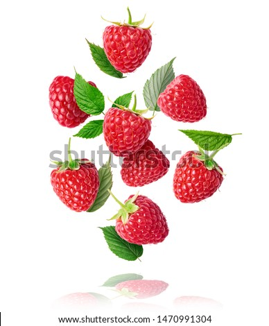 Fresh ripe raspberries, green leaves and flowers flying in the air isolated on white background. Concept of food levitation, high resolution image #1470991304