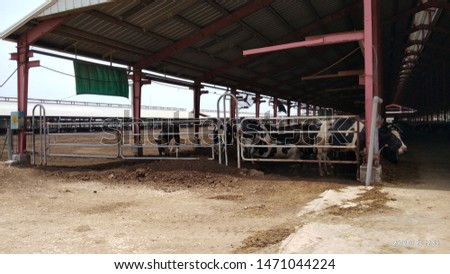 iron cattle shede for cow #1471044224