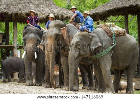 CHIANG MAI, THAILAND - JULY 21: Trainer and his elephant waiting new show at Maesa Elephant Camp on July 21, 2013 in Chiang Mai, Thailand.  #147116069