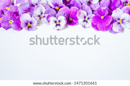 Pansy Flower Bouquet. Purple Pink Flowers on White Background. Top view, Flat lay, Copy Space