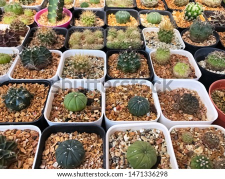 Group of cactus in plastic pot stacked together,show detail and texture of tree species,beauty by nature #1471336298