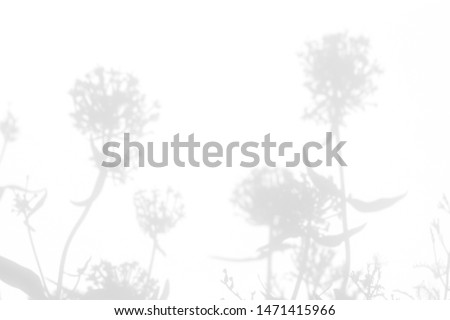Gray shadows of the flowers and delicate grass on a white wall. Abstract neutral nature concept background. Space for text. Blurred, defocused. #1471415966