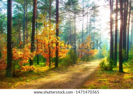 Scenery autumn forest. Sunny woodland. October nature landscape. Beautiful bright forest in sunlight. #1471470365