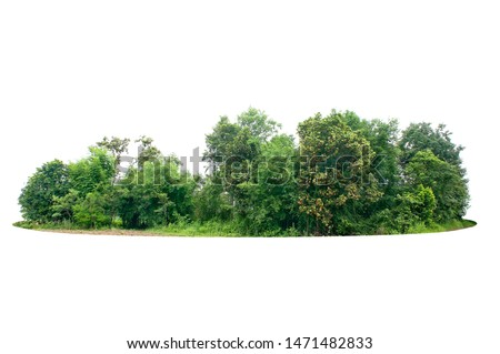 Group of tree isolated on white #1471482833