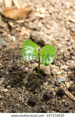 New plant growing from soil  #147156830
