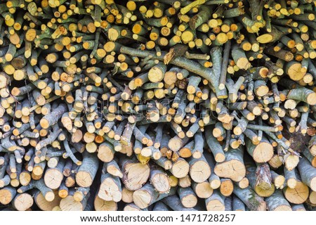 Fire wood in a farm  at Seyne les Alpes near Digne in Provence France. #1471728257