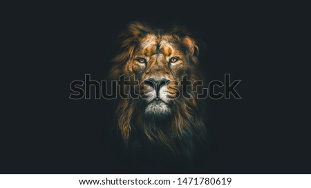 Portrait of a Beautiful lion, lion in dark  #1471780619