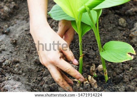 Two hands are planting trees. save the world                        #1471914224