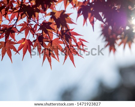 Autumn leaves dyed in beautiful colors #1471923827