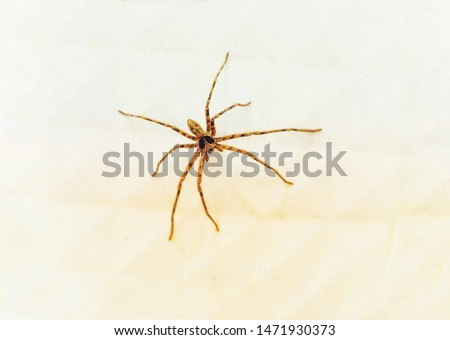 Spiders are creatures that are arthropods or arthropods. There are 8 legs on the wall. #1471930373