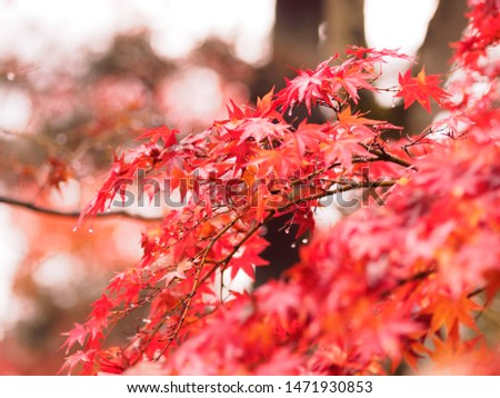 Autumn leaves dyed in beautiful colors #1471930853