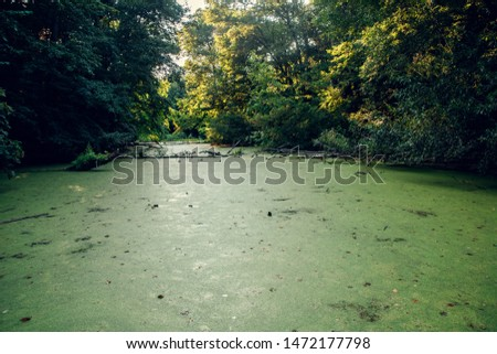 Overgrown water in the swamp. Swamp in the forest #1472177798