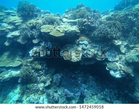 The coral reef under the blue sea #1472459018