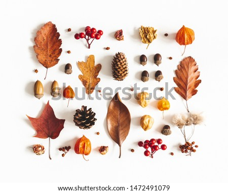 Autumn composition. Pattern made of dried leaves, flowers, berries on white background. Autumn, fall, thanksgiving day concept. Flat lay, top view Royalty-Free Stock Photo #1472491079