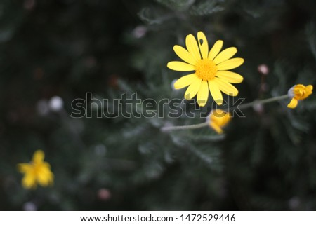 Yellow flowers look outstanding and beautiful #1472529446