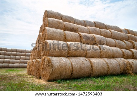 Bales of hay. Hay bales are stacked in large stacks. Harvesting in agriculture. #1472593403