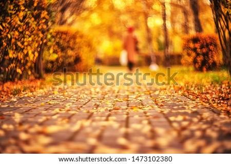 autumn park on blurry background #1473102380