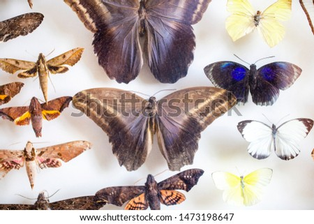 entomology. collection of tropical butterflies to study science entomology. #1473198647