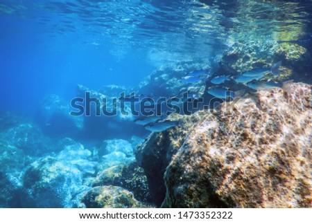 Underwater Scene Sunlight, fish Underwater Life. #1473352322