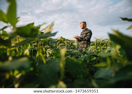Agronomist inspecting soya bean crops growing in the farm field. Agriculture production concept. young agronomist examines soybean crop on field in summer. Farmer on soybean field #1473659351