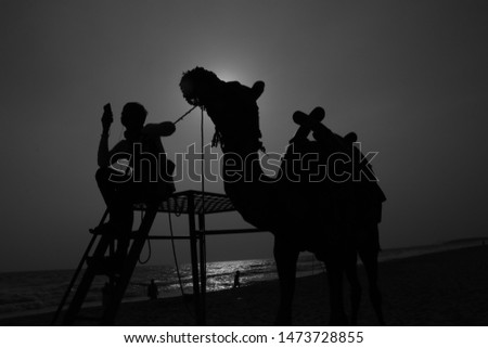 Beautiful silhouett camel with sunset #1473728855