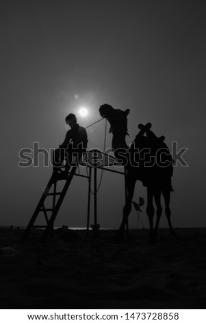 Beautiful silhouett camel with sunset #1473728858
