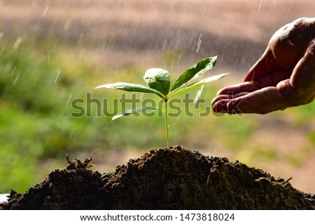 Hand of watering the soil of trees and Care tree planting and saving the planet to deduct global warming #1473818024