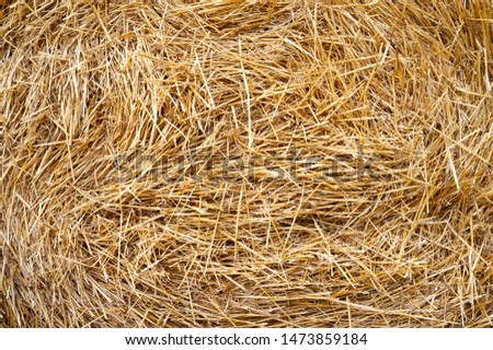 Hay texture. Hay bales are stacked in large stacks. Harvesting in agriculture. #1473859184
