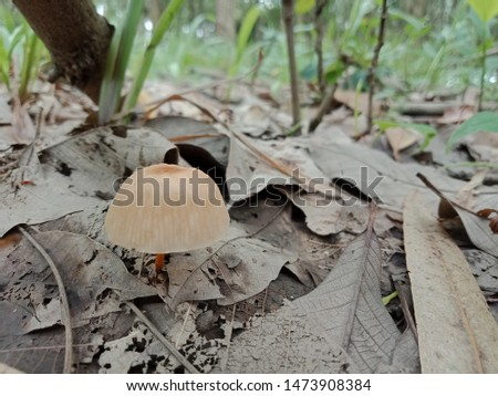 Mushrooms are born on wood, natural fungi in the forest. #1473908384