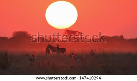 Sunset over African Plains, as seen in Namibia - Red glow and black silhouette of Zebra