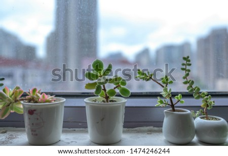 Composition green plant succulent plant potted plant #1474246244