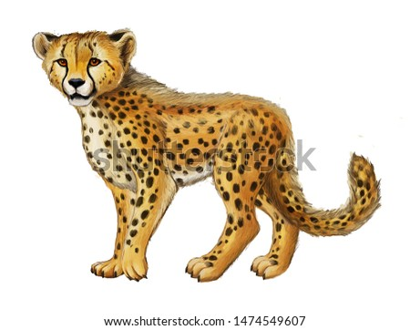 cartoon scene with young cheetah resting on white background illustration for children #1474549607