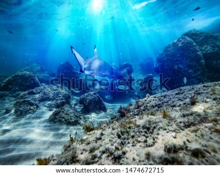 Underwater ocean background with a shark  #1474672715