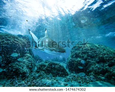 Underwater ocean background with a shark and sunbeams #1474674302