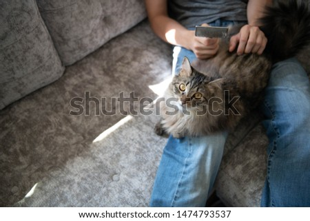 Norwegian Forest Cat Being Groomed While on Human Lap #1474793537
