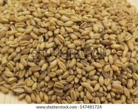 Wheat seed #147481724