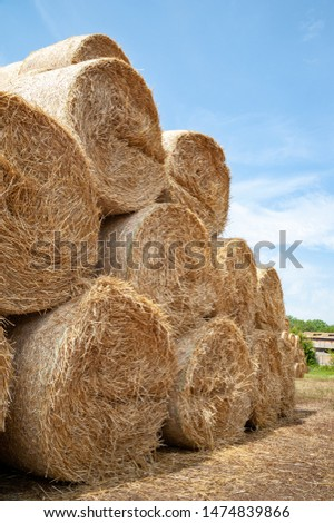 Close-up of hay bales. Hay bales are stacked in large stacks. Harvesting in agriculture. #1474839866